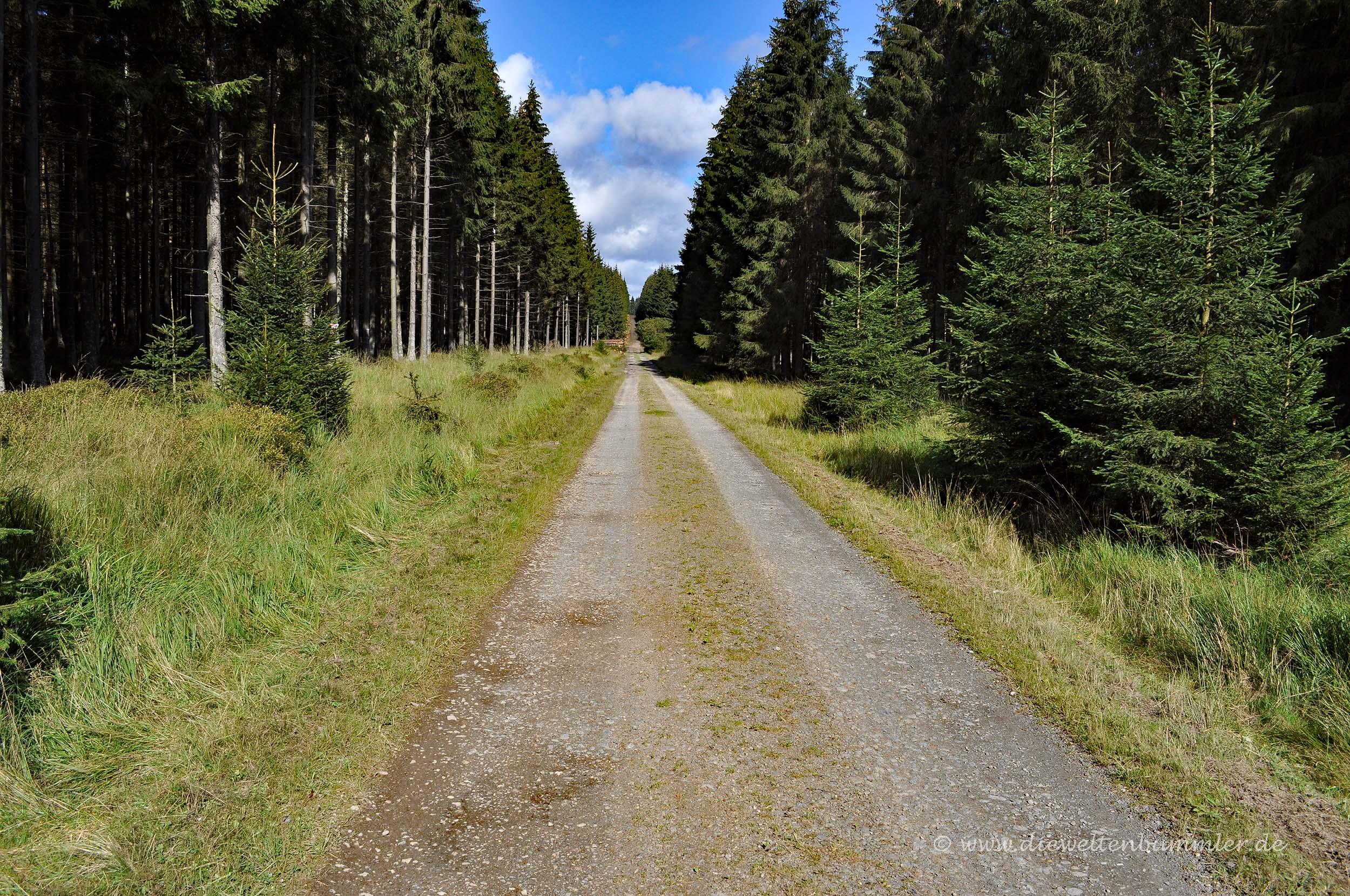 Waldweg im Venn