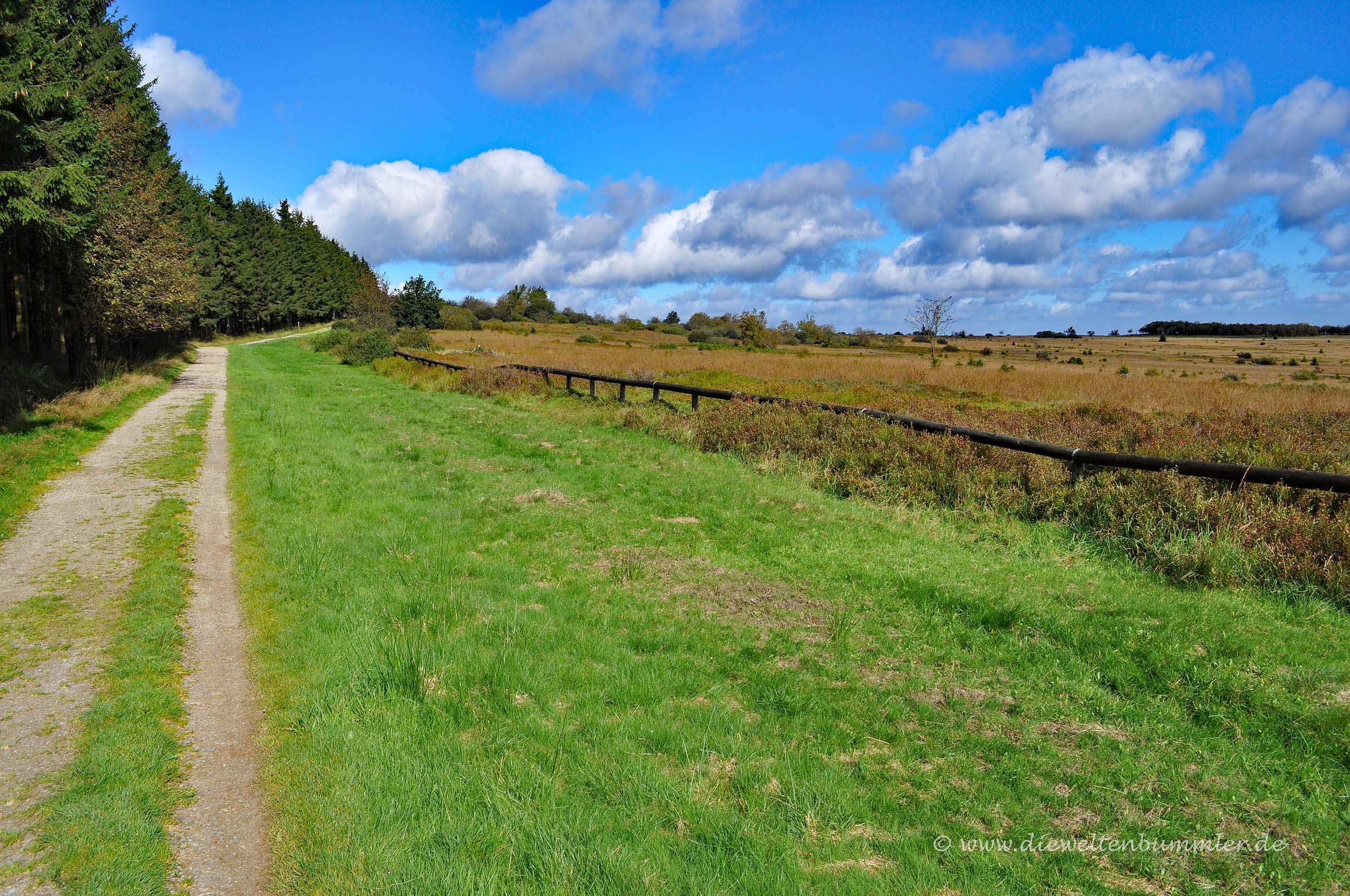 Wandern am Wallonischen Venn