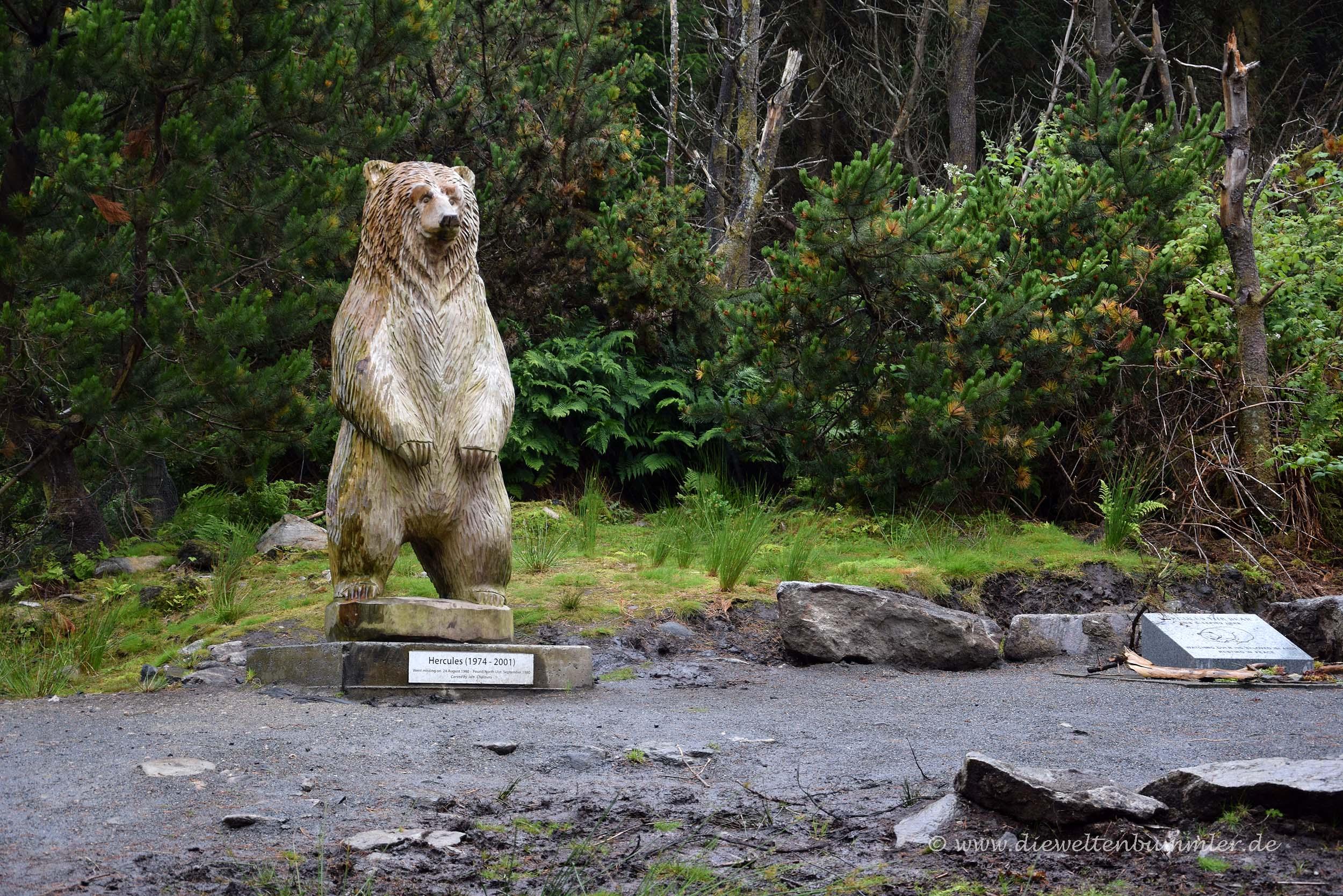 Hercules der Grizzlybär