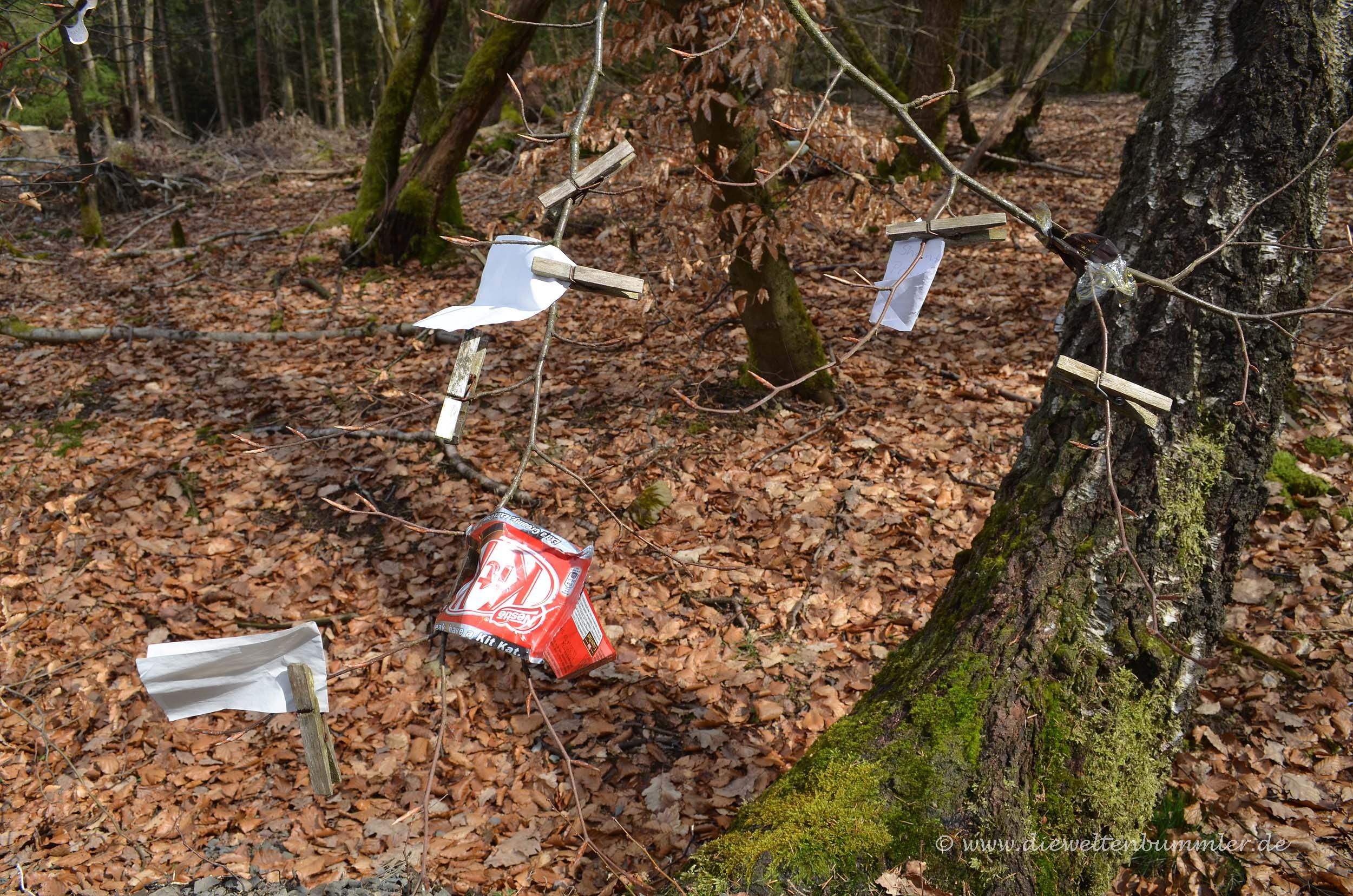 Müll im Wald platziert
