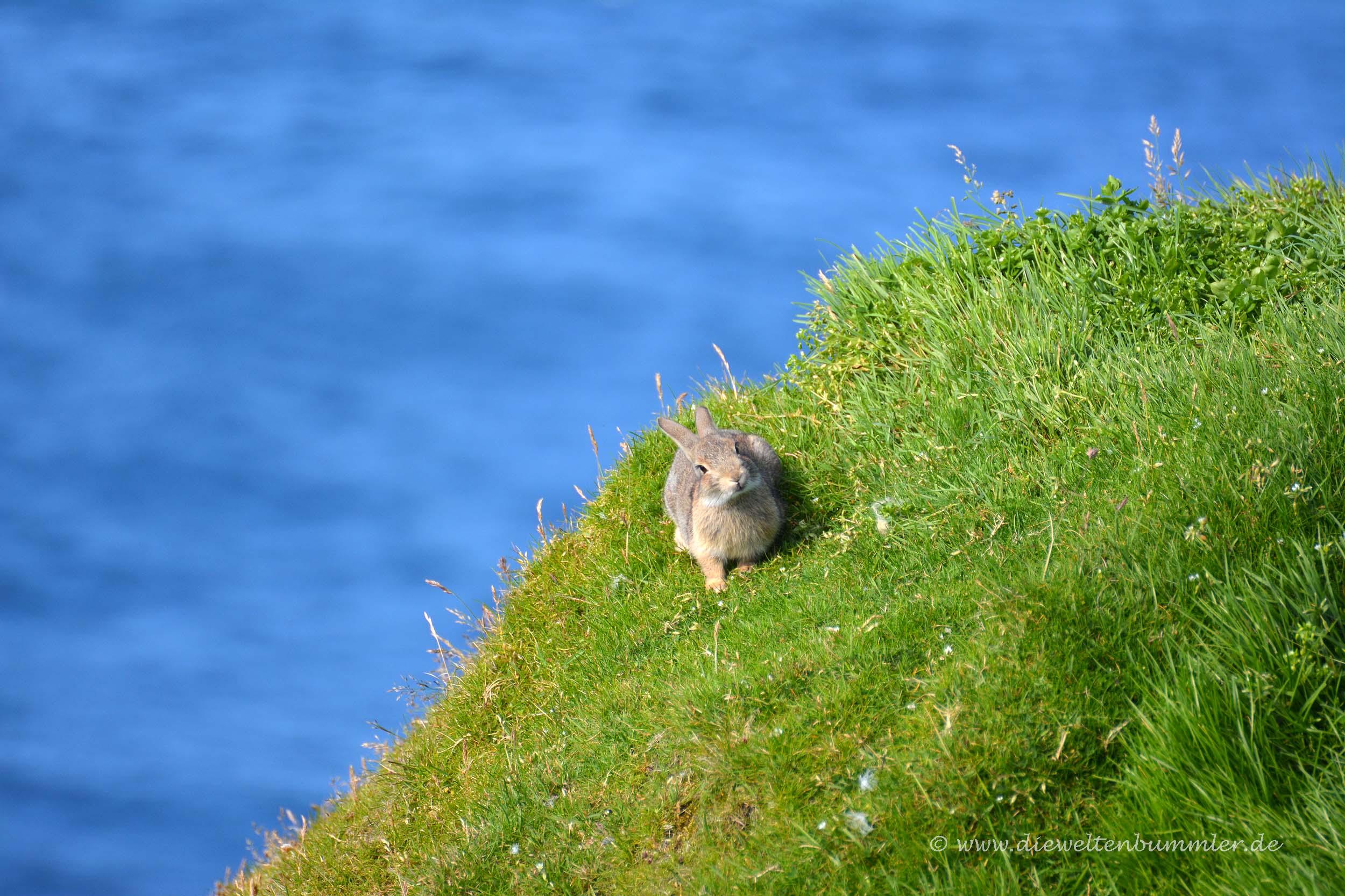 Da schaut der Hase