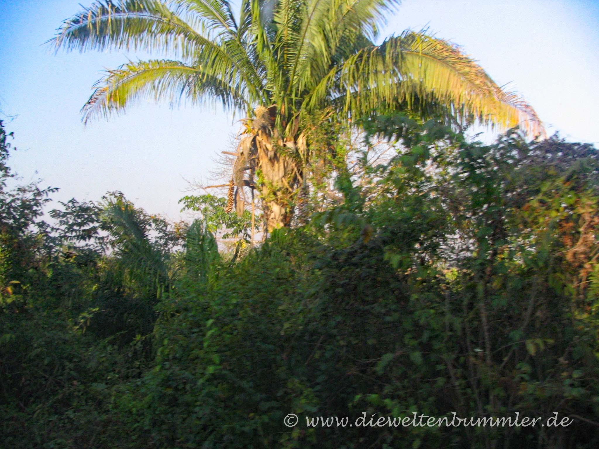 Regenwald aus dem Bus gesehen