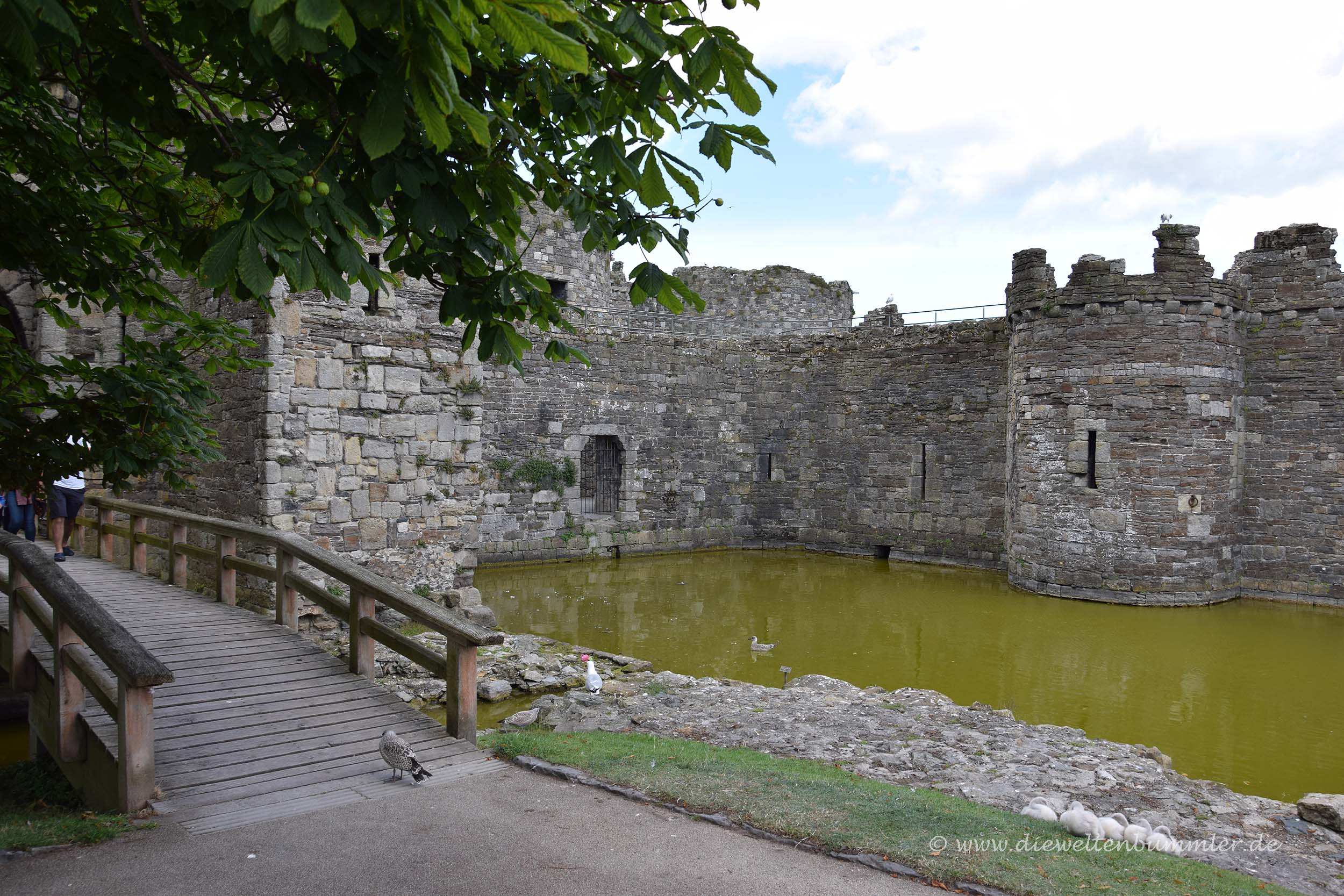 Wasserburg Beaumaris Castle