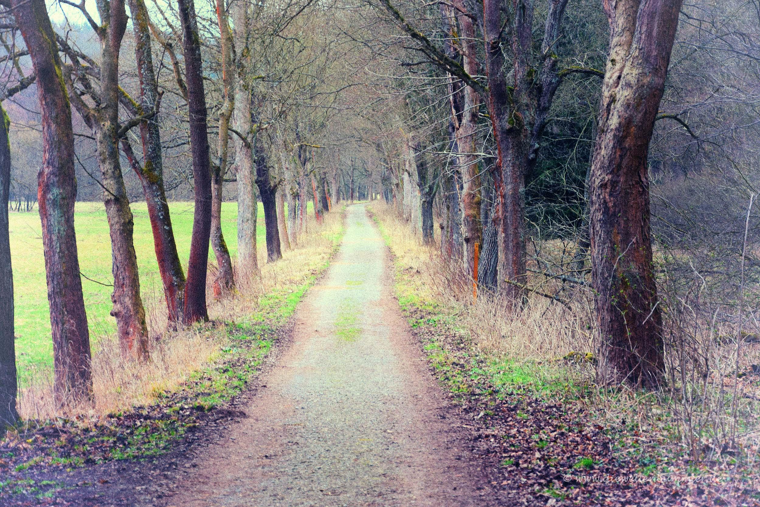 Wanderweg im Selketal