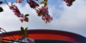 Panorama im Frühling