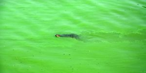 Schildkröte im See