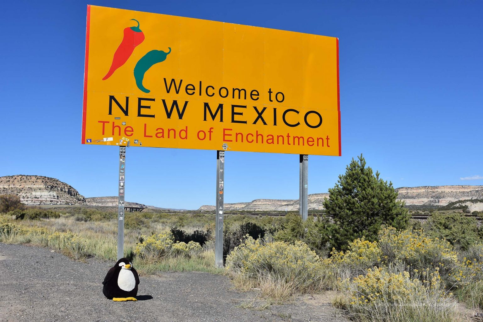 Pingu in New Mexico