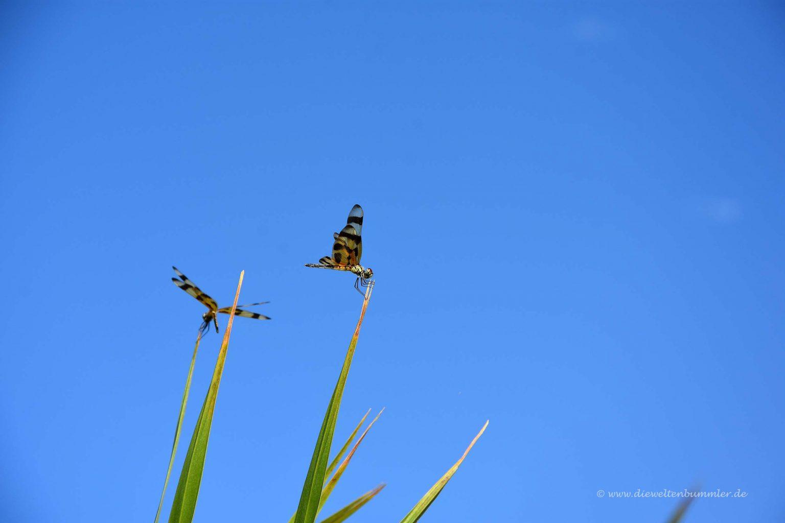 Süße Schmetterlinge