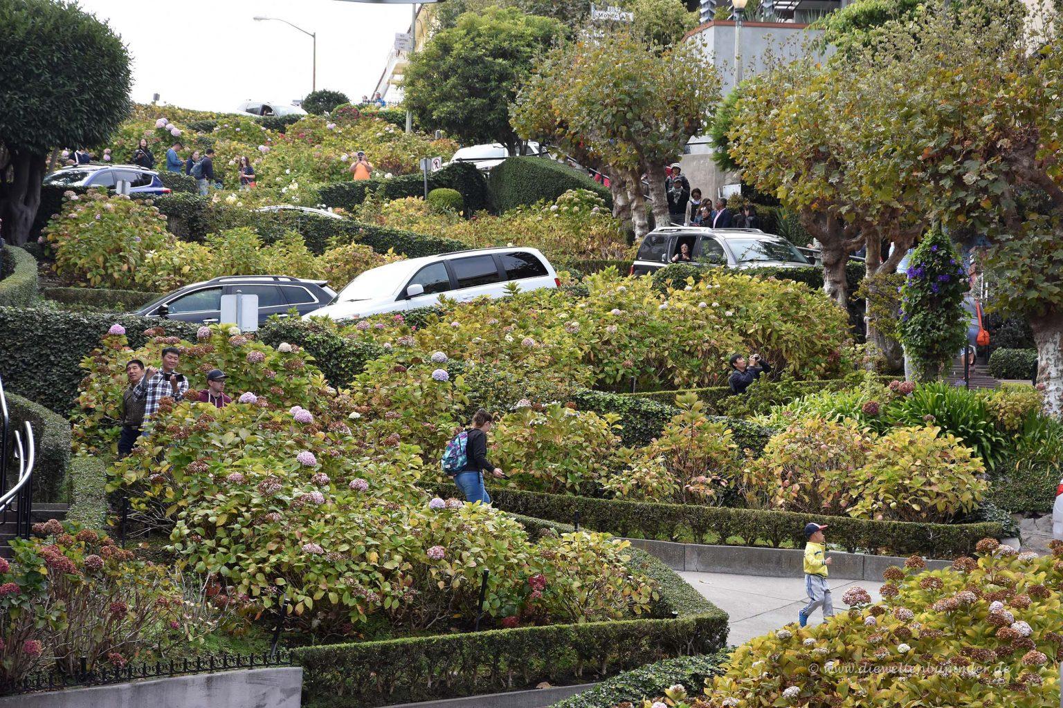 Kurvige Lombard Street in San Francisco