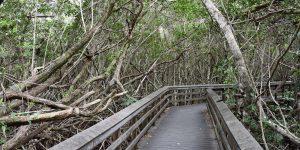 Weg durch die Mangroven
