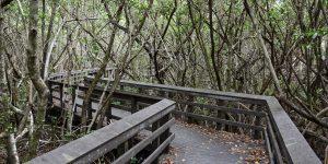 Wanderweg durch den Mangrovenwald