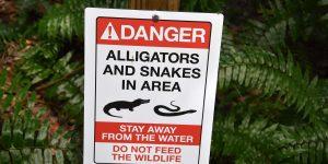 Achtung Alligatoren