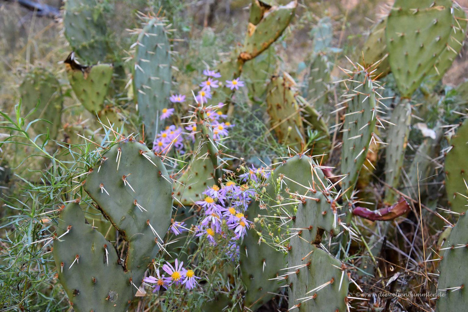 Kaktus im Canyon
