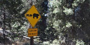 Achtung vor den Wildtieren