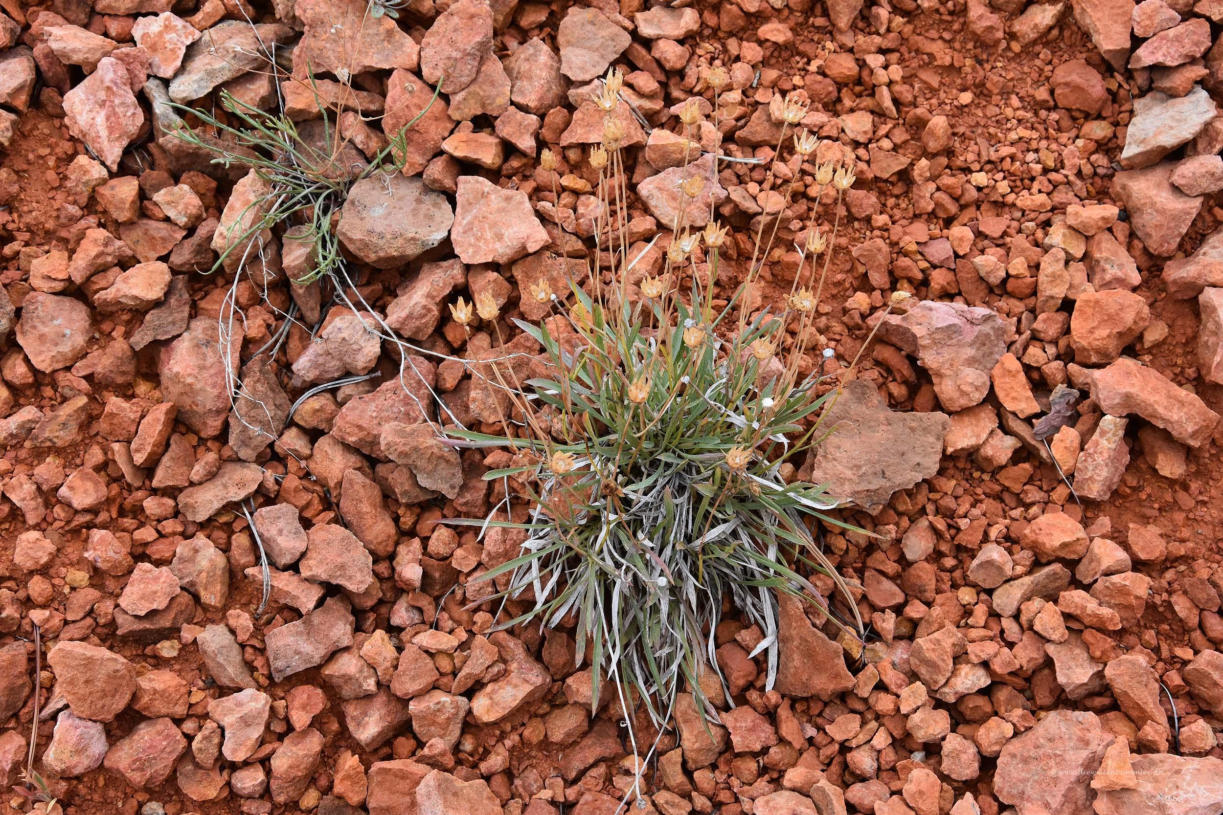 Botanik im Canyon