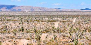 Hügelige Piste in Nevada