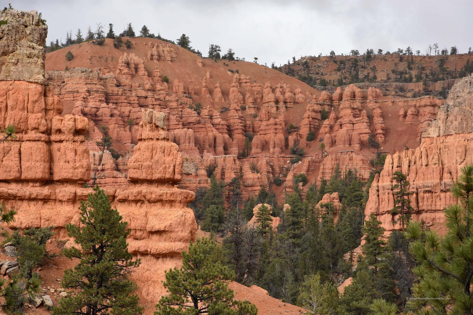 Hoodoos im Red Canyon