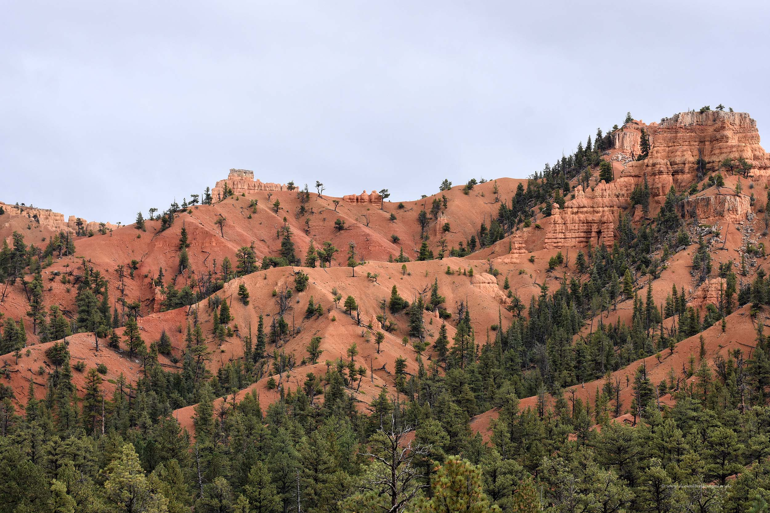 Landschaft im Red Canyon