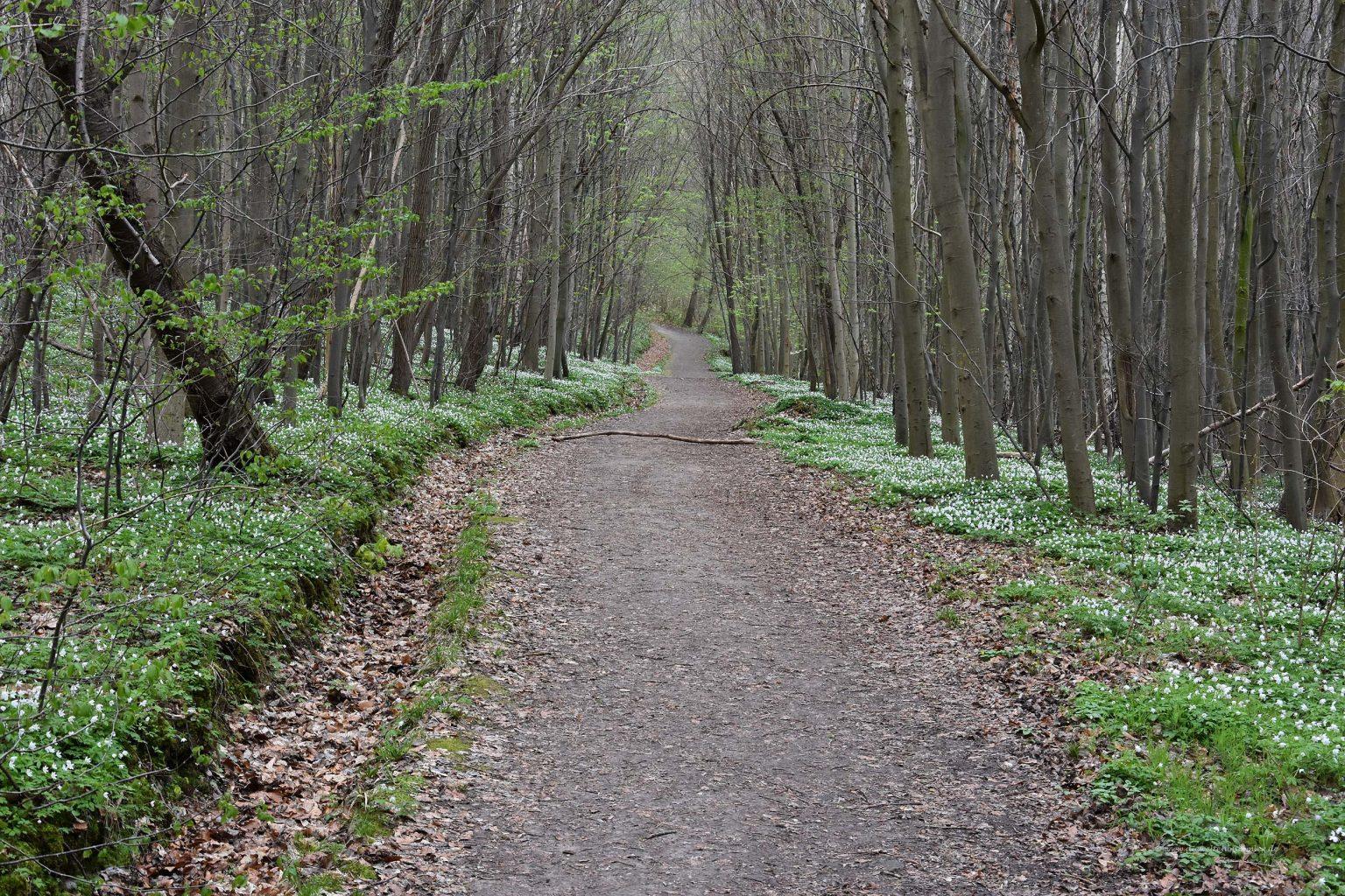 Wanderweg am Selketal