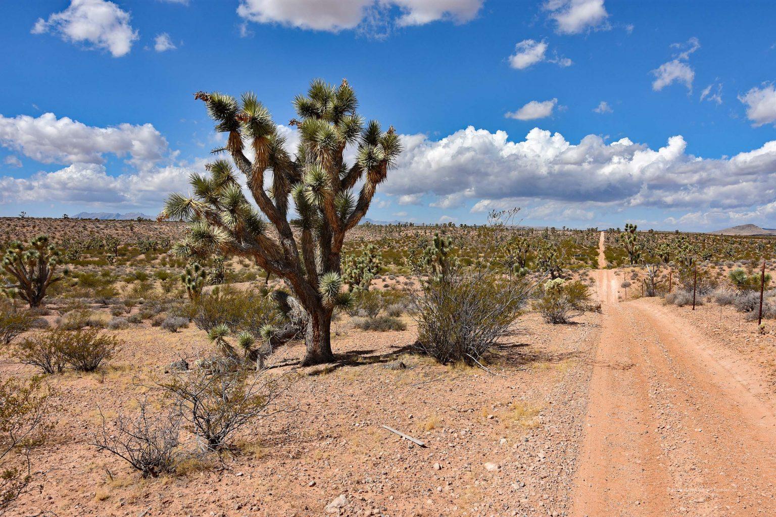 Weite Straße durch die Wüste