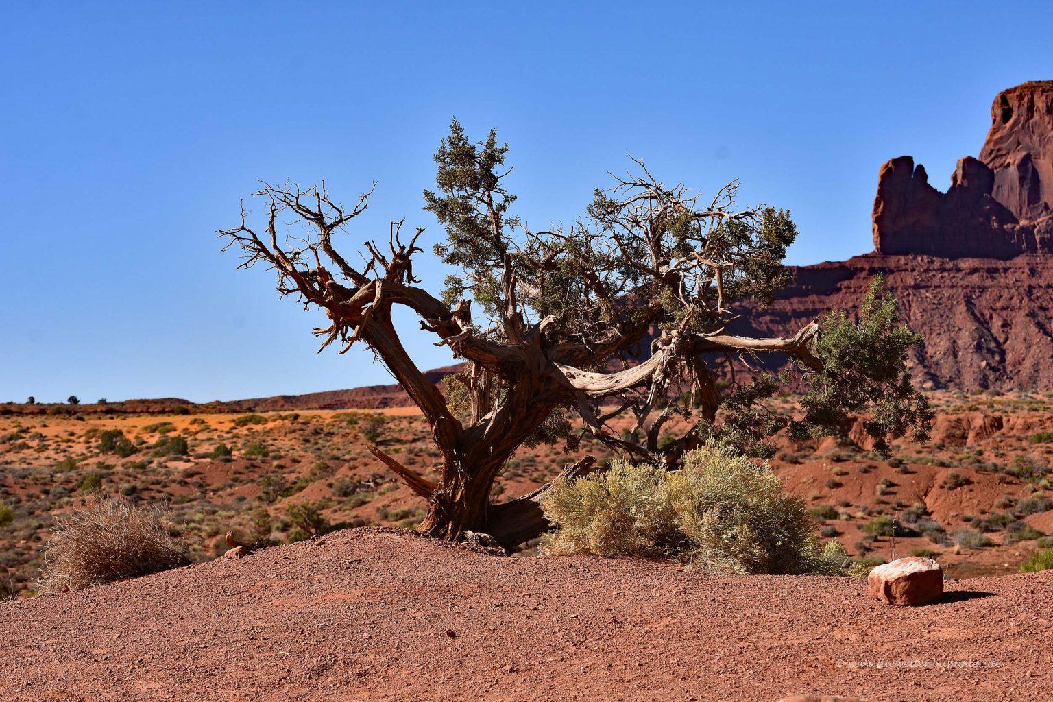Einsamer Baum in trockener Landschaft