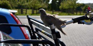 Vogel auf dem Fahrradträger