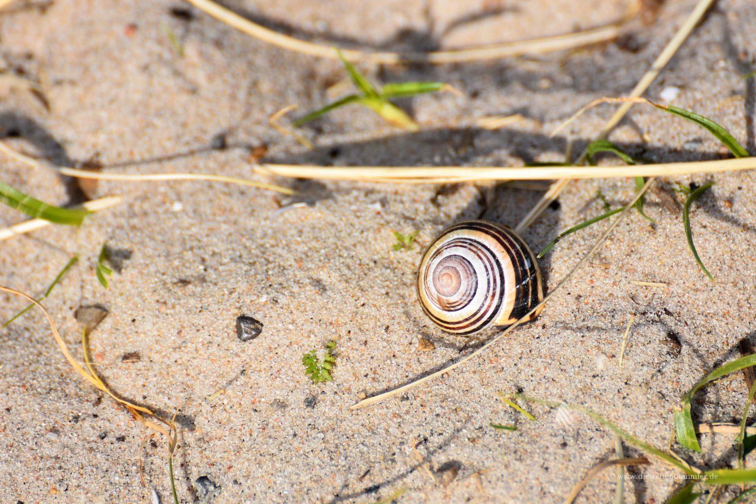 Schnecke im Sand