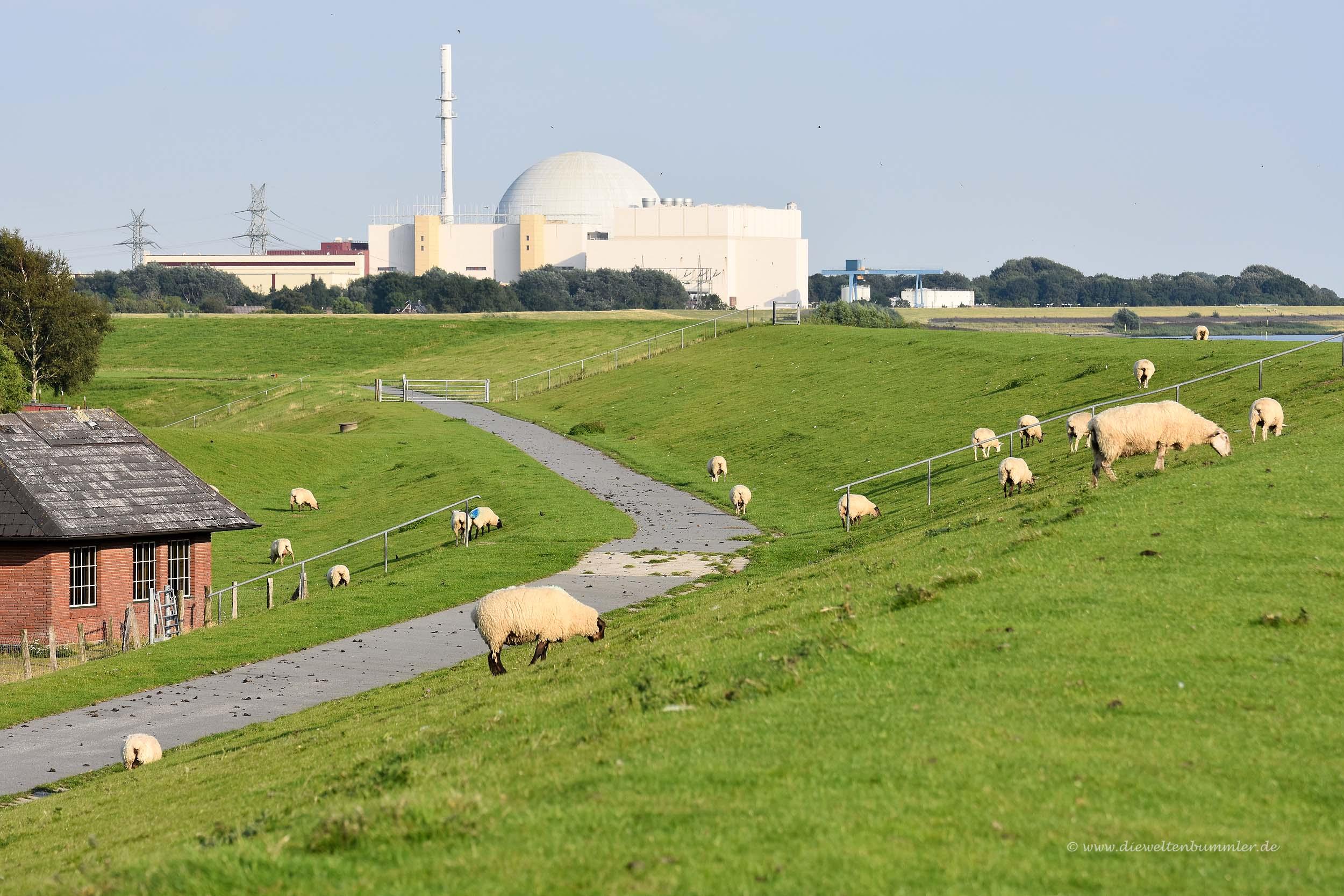 Schafe am Atomkraftwerk Brokdorf