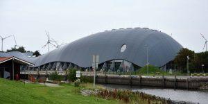 Wal in Friedrichskoog
