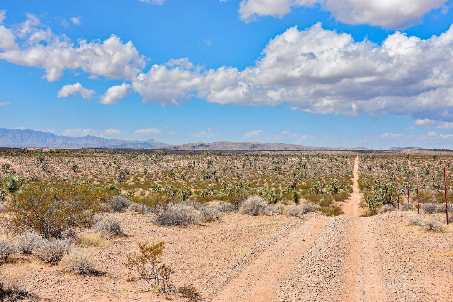 Schotterpiste in der Mojave-Wüste