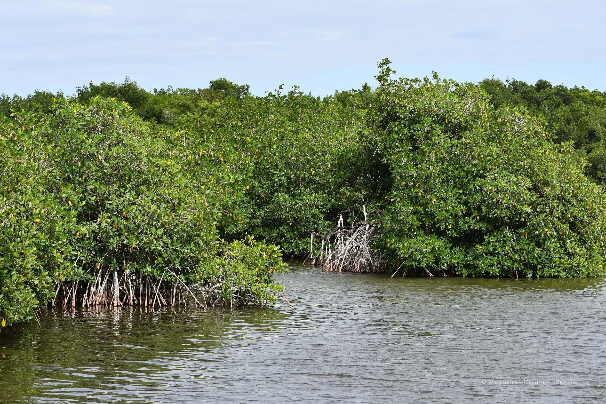 Mangrovenwälder