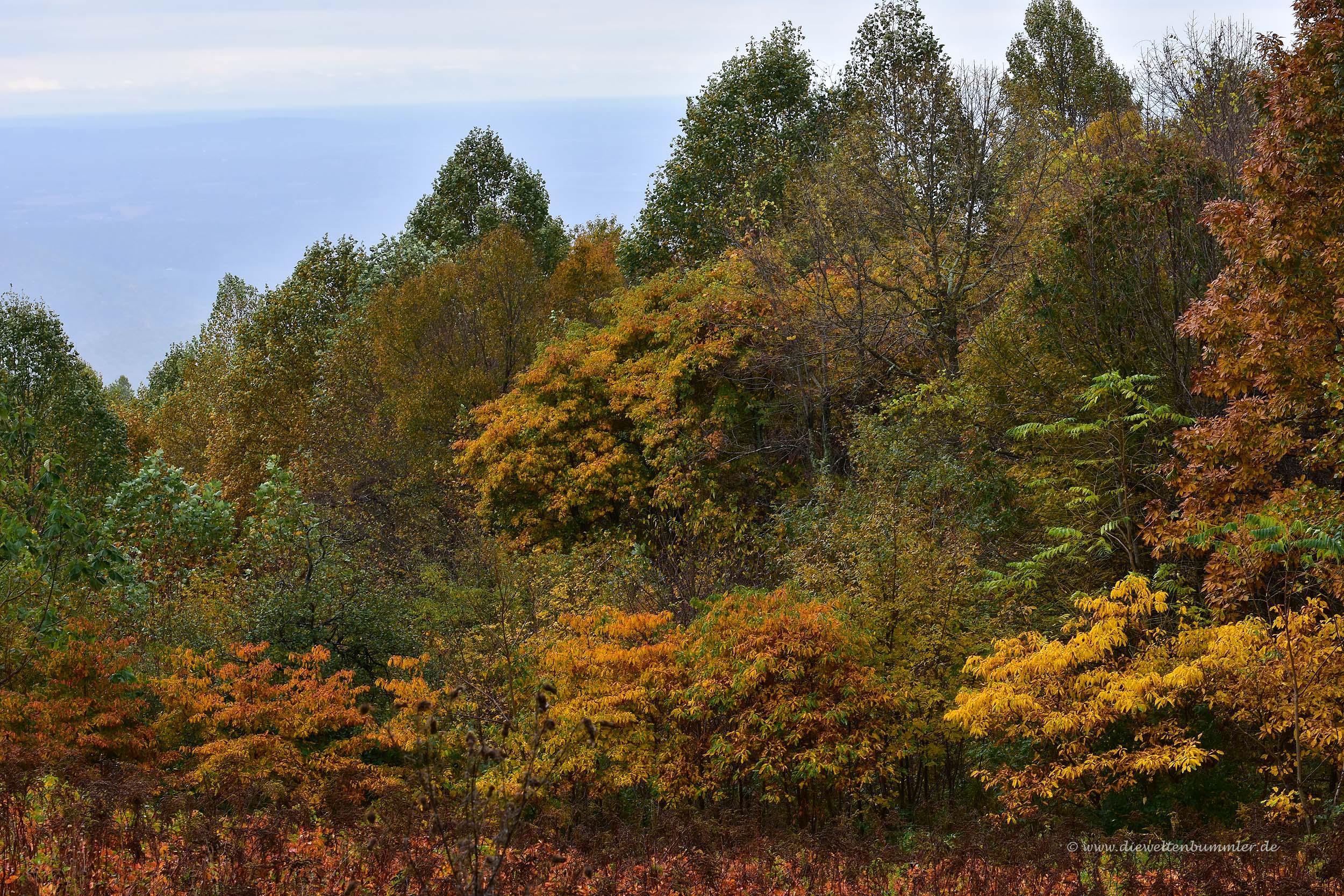 Wald im Shenandoah-Nationalpark