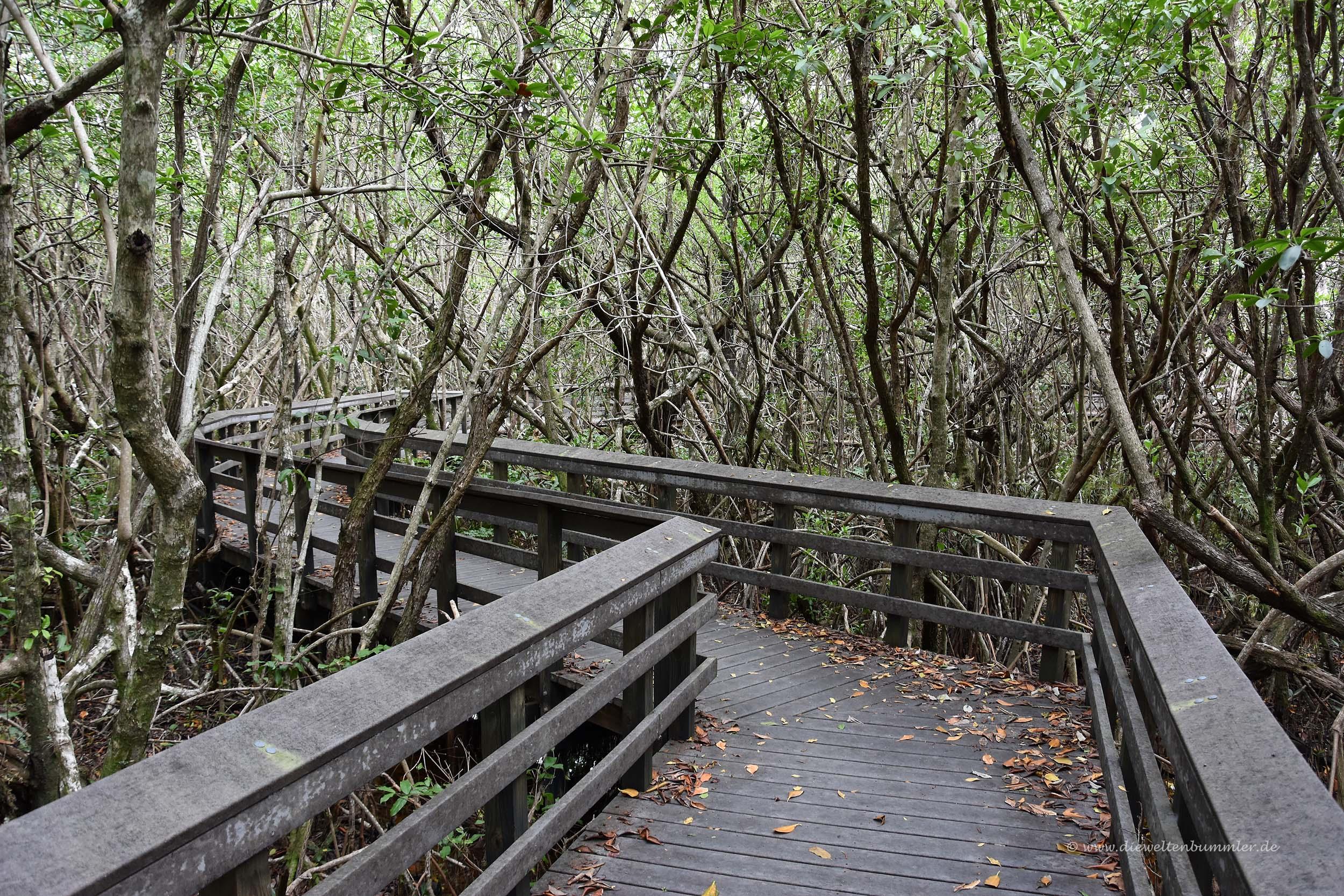 Wanderweg durch die Mangroven