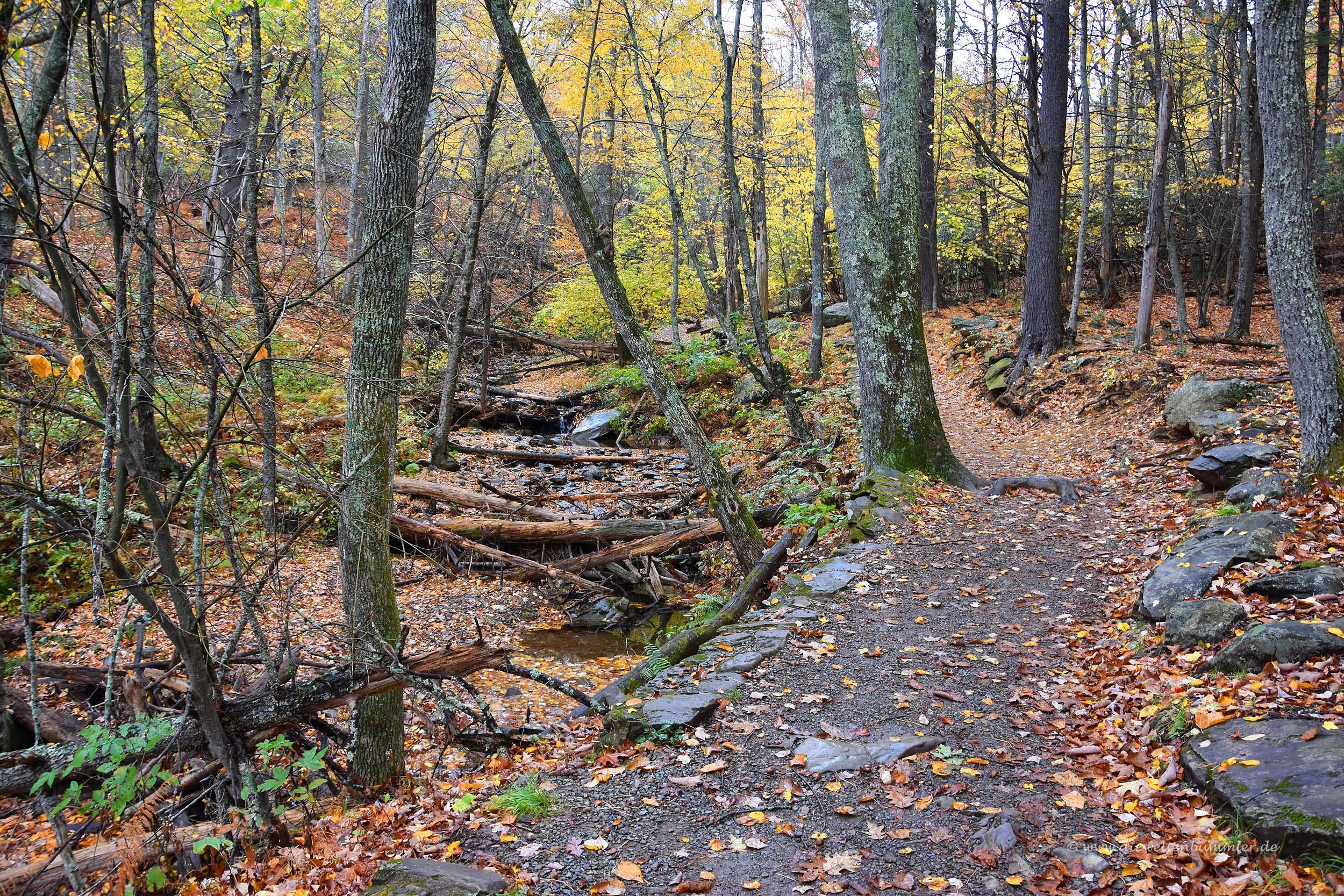 Wanderweg im Shenandoah-Nationalpark