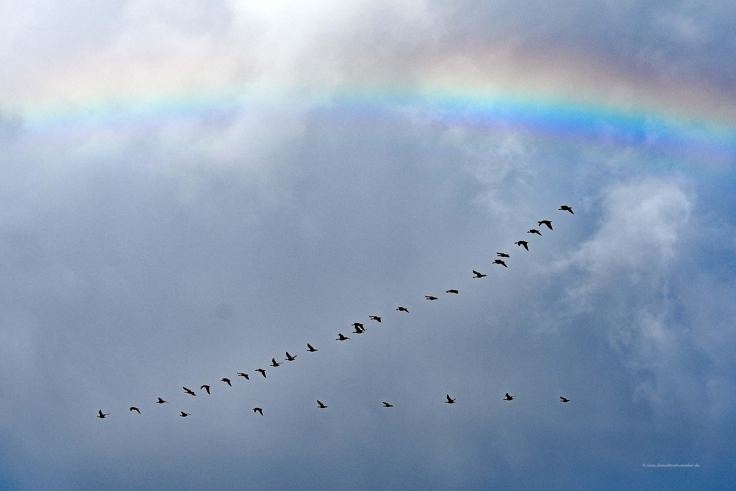 Zugvögel unterm Regenbogen