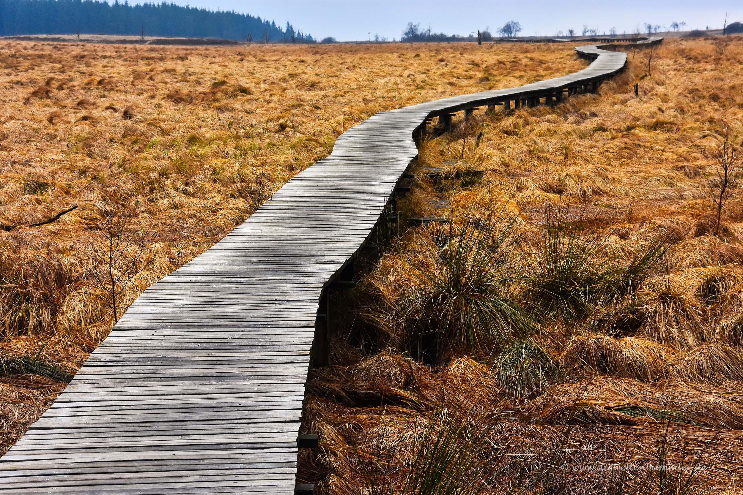 Auf Holzstegen durch das Hohe Venn