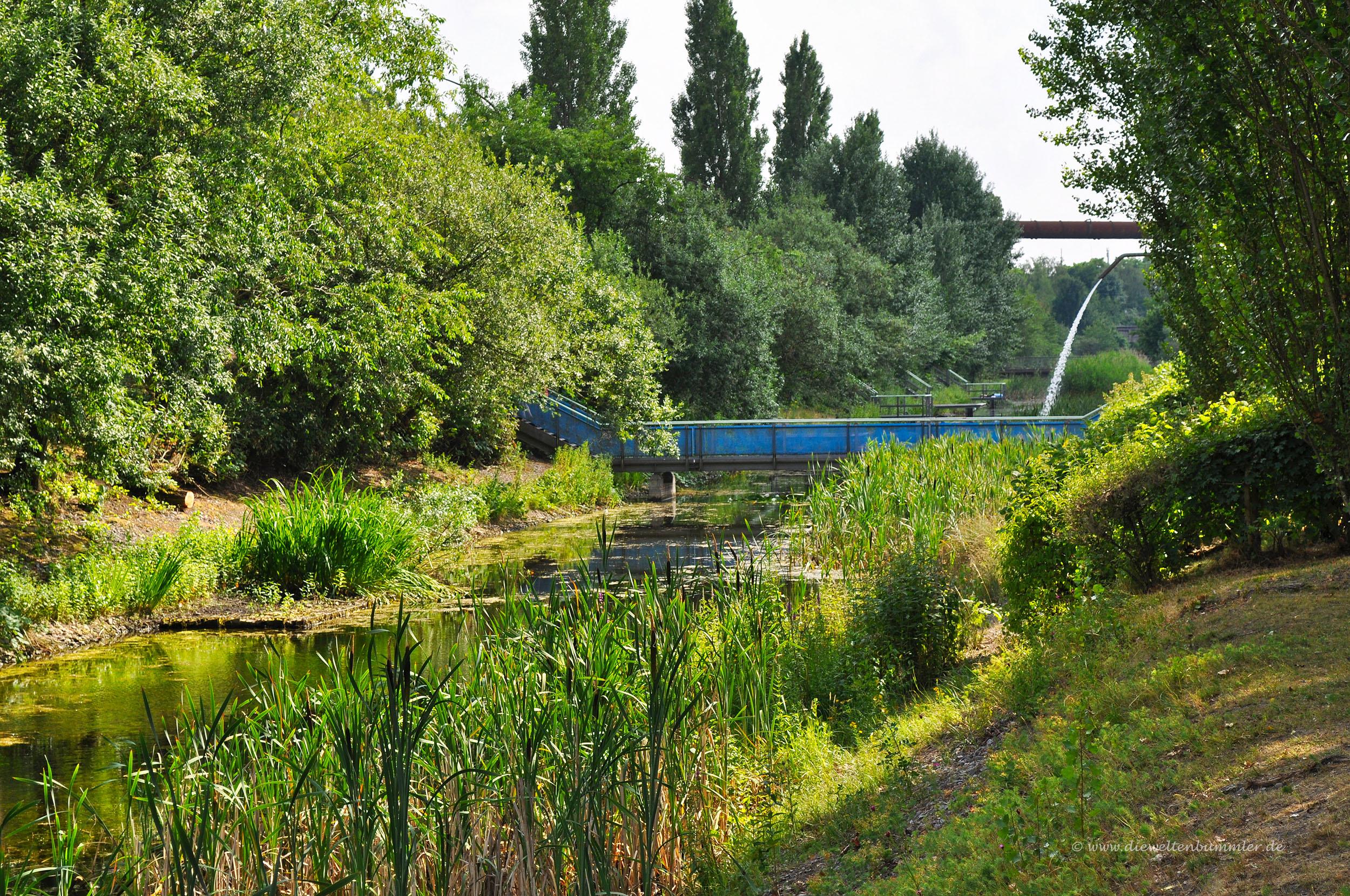 Biotop im Landschaftspark Duisburg