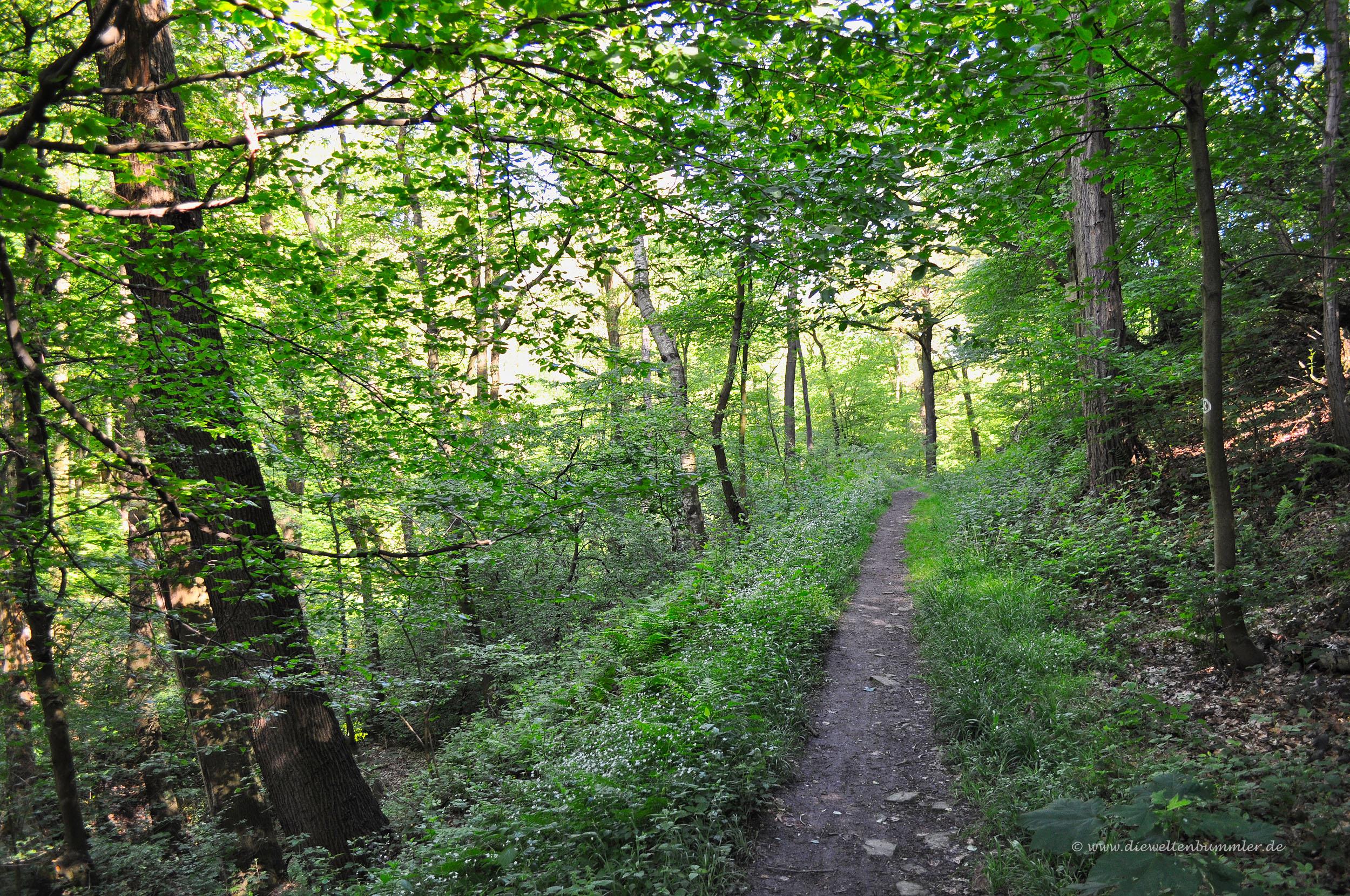 Grüne Landschaft im Ruhrgebiet