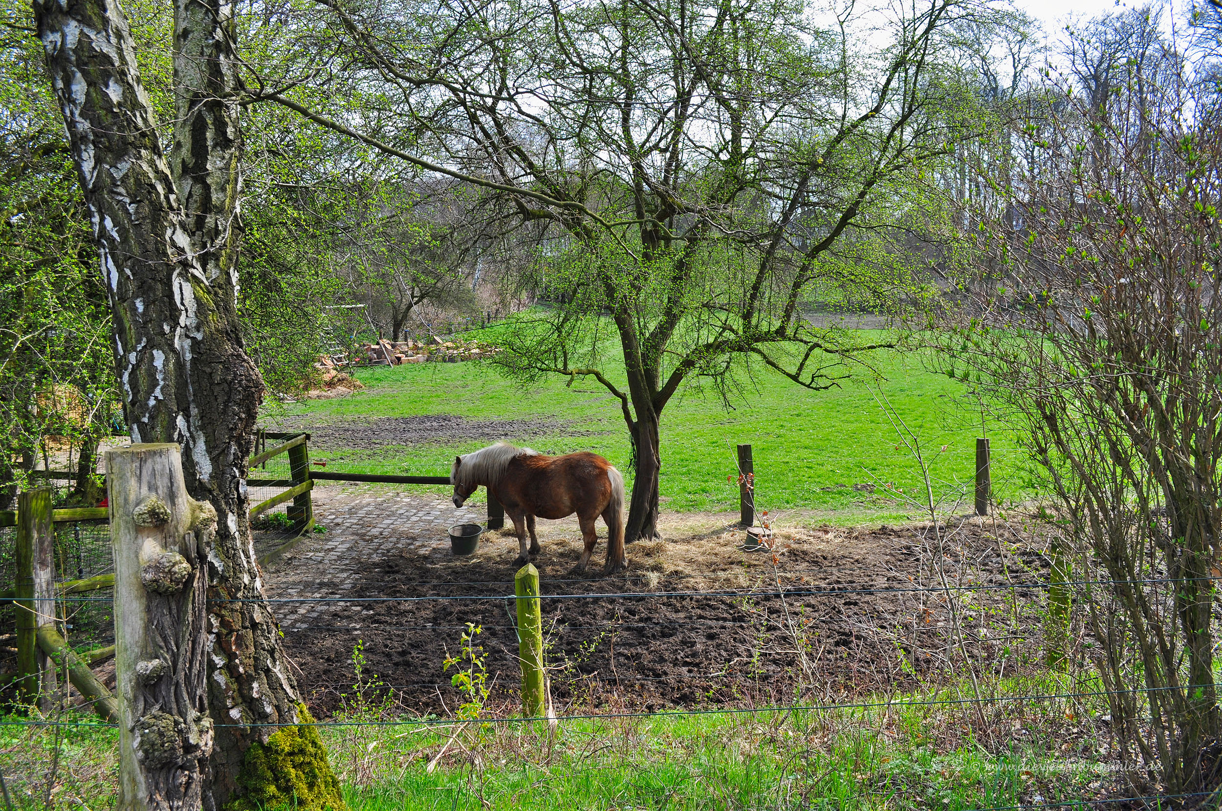 Pferdekoppel am Waldrand