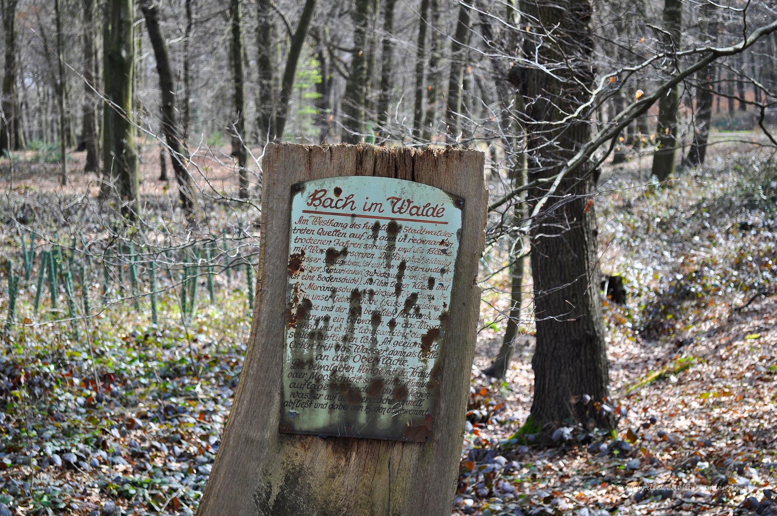 Poetisch durch den Wald