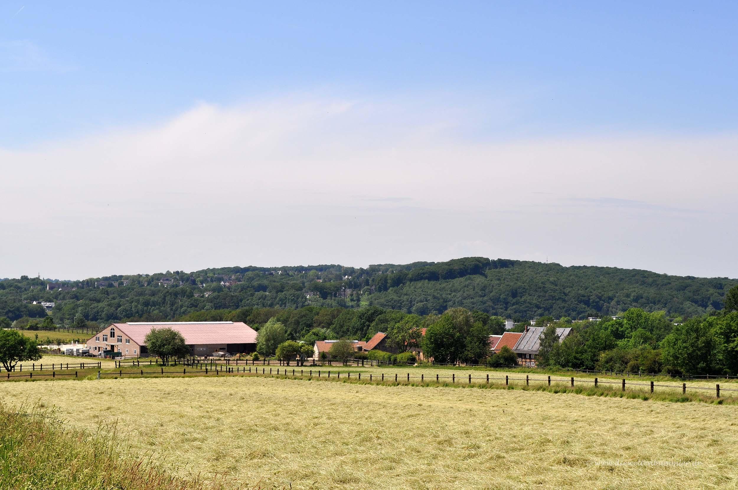 Schellenberger Wald in Heisingen