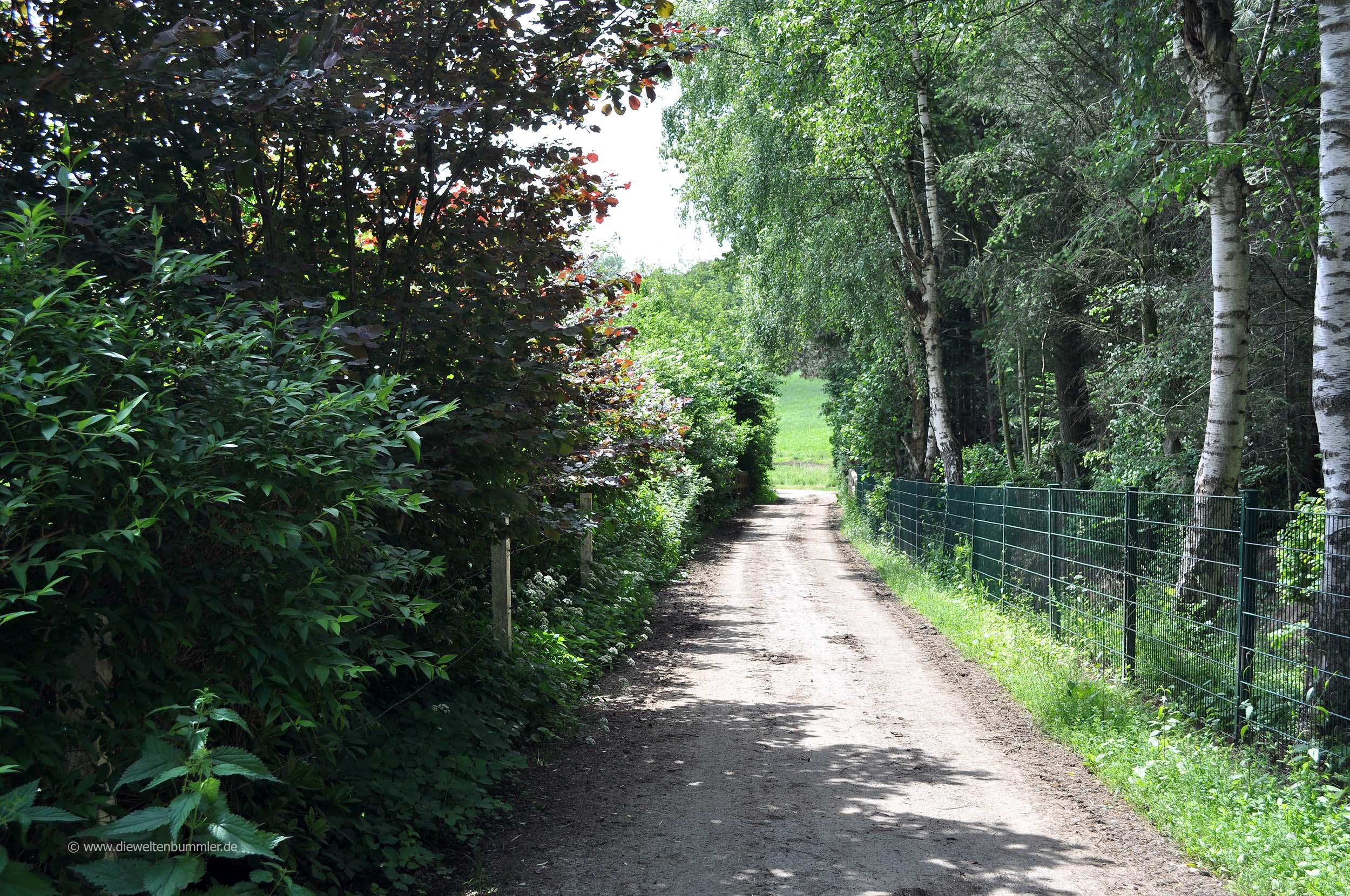 Waldweg zum Hespertal