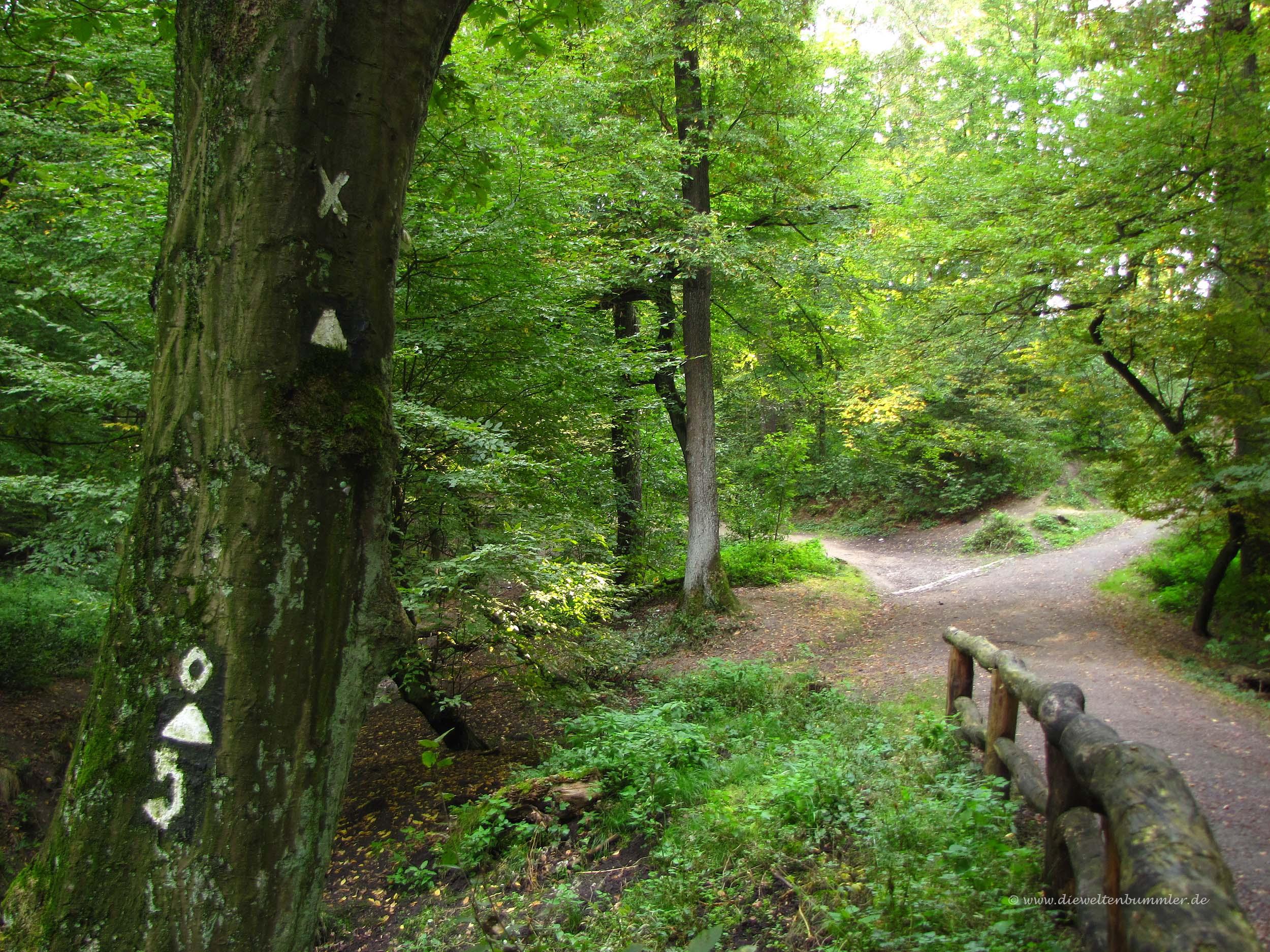 Wanderung durch den Schellenberger Wald