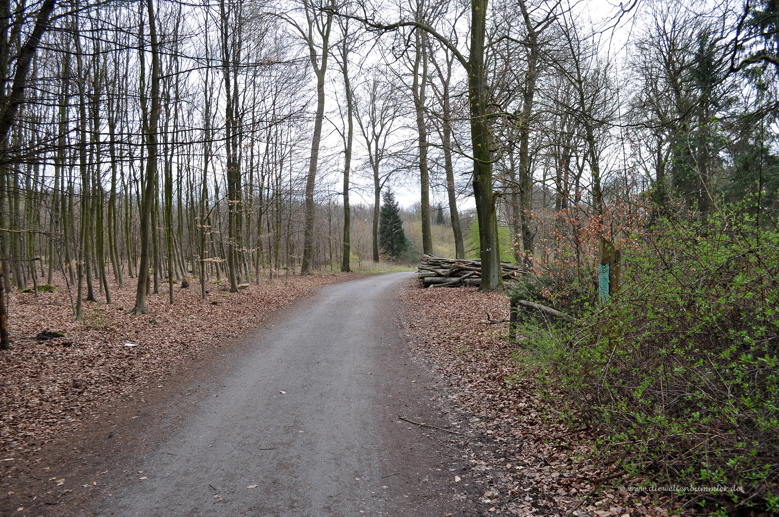 Wanderung im Stadtwald