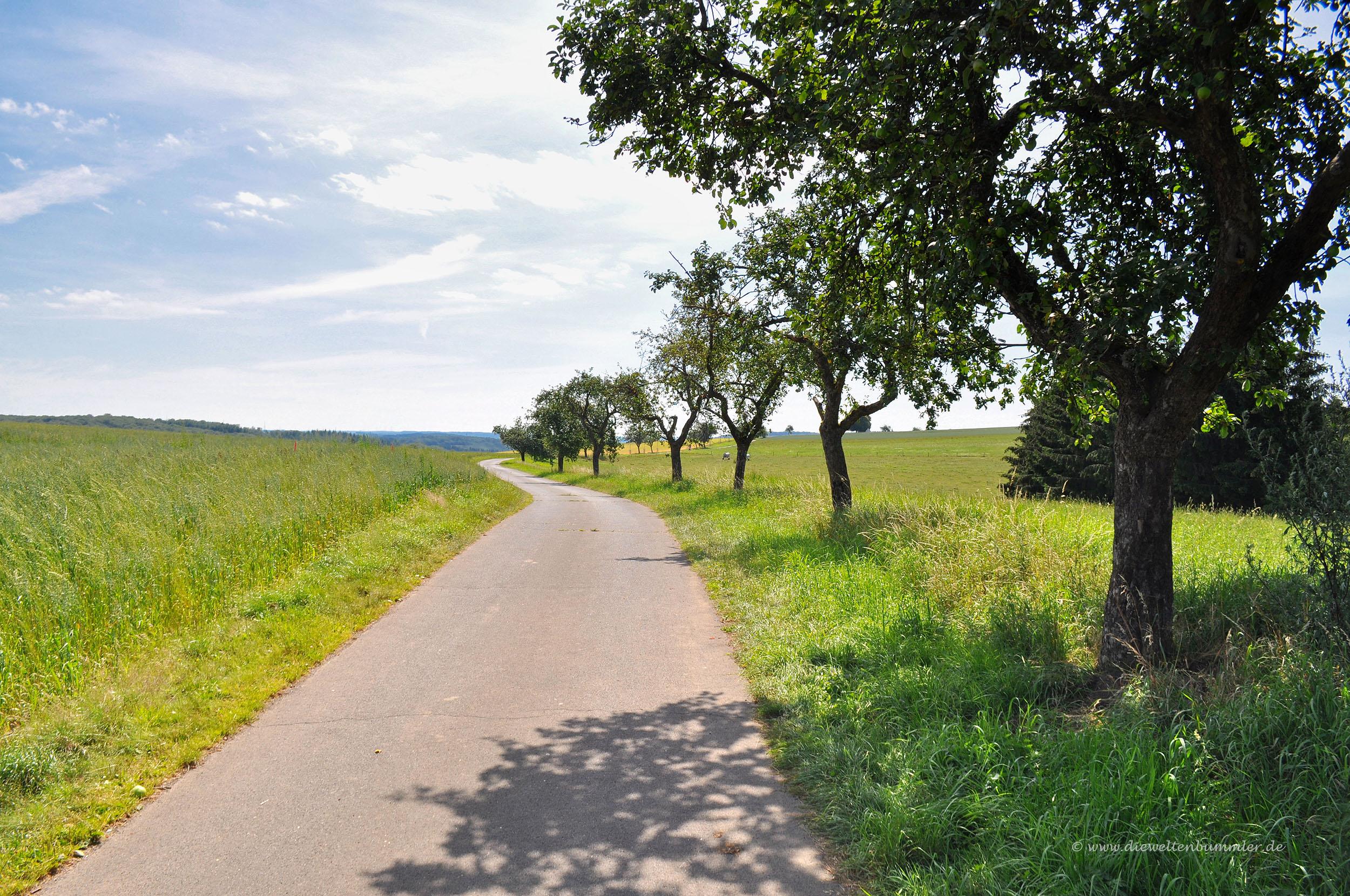 Wanderweg bei Bad Bertrich