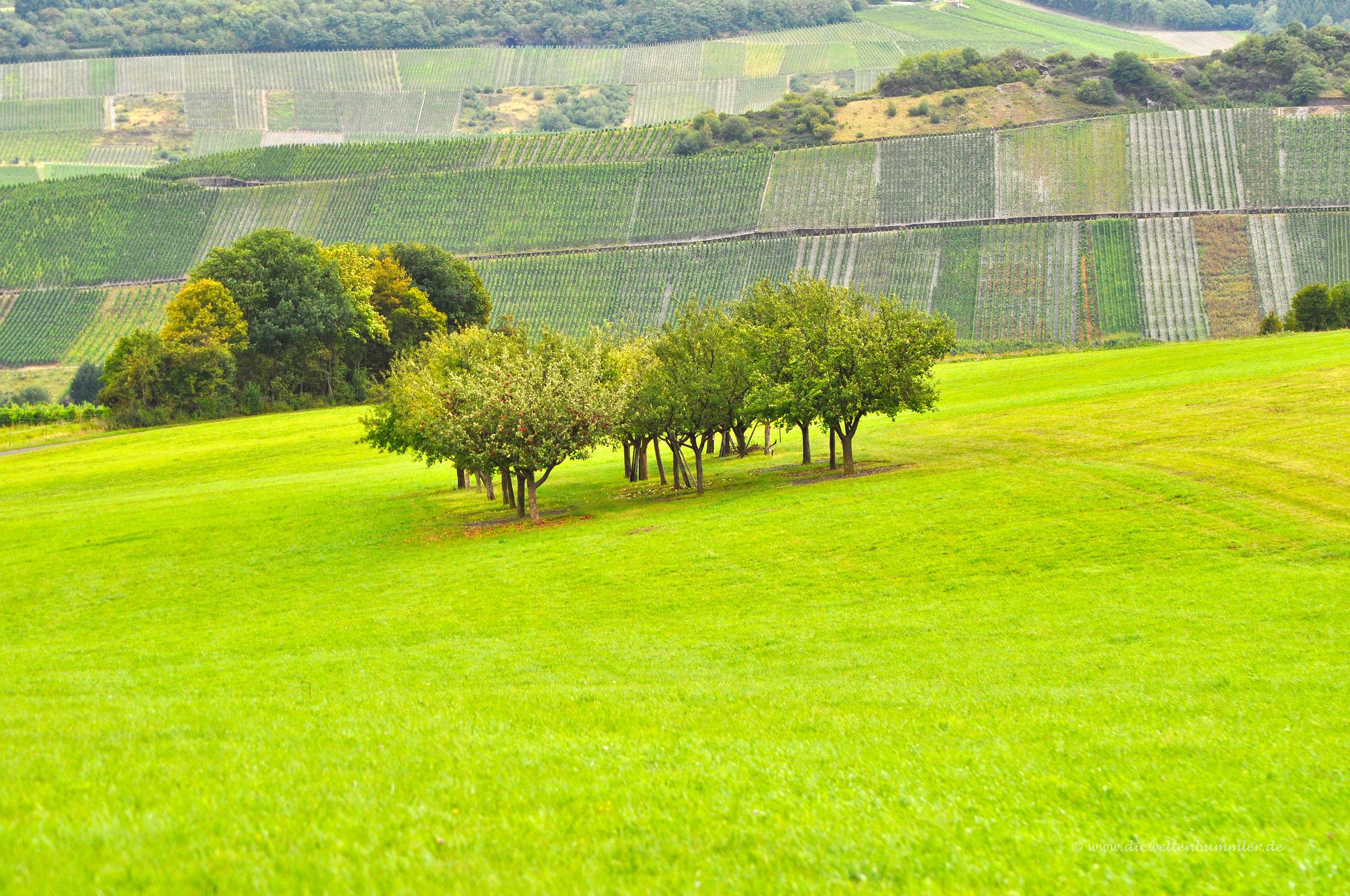 Bäume vor Weinbergen
