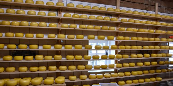 Käse in Zaanse Schas