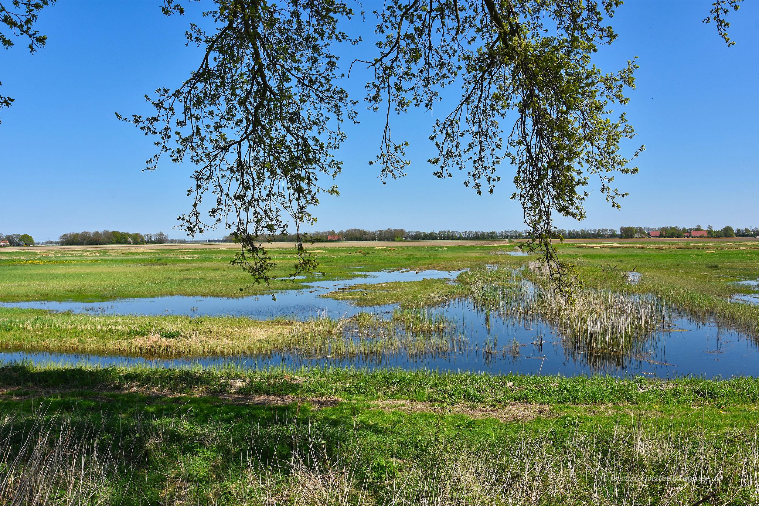 Polderlandschaft bei Schokland