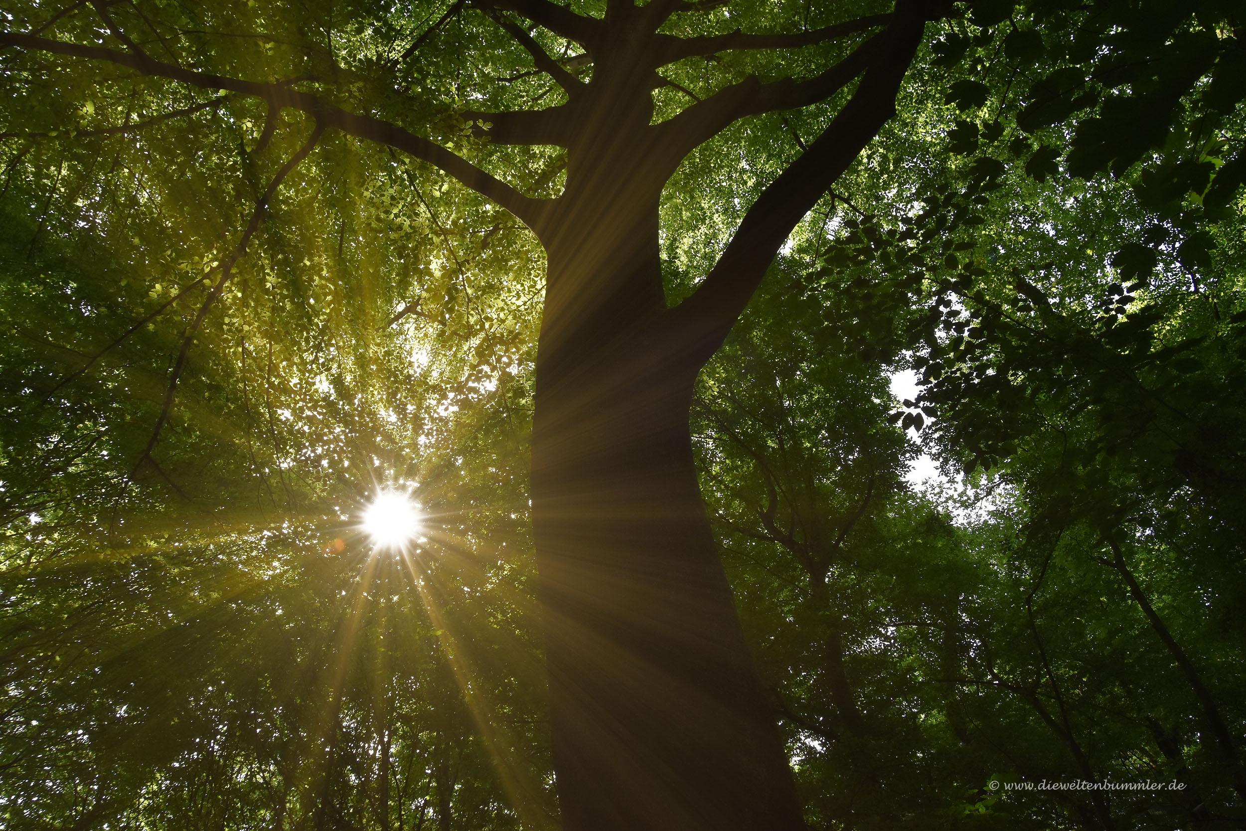 Die Sonne blinzelt durch die Blätter