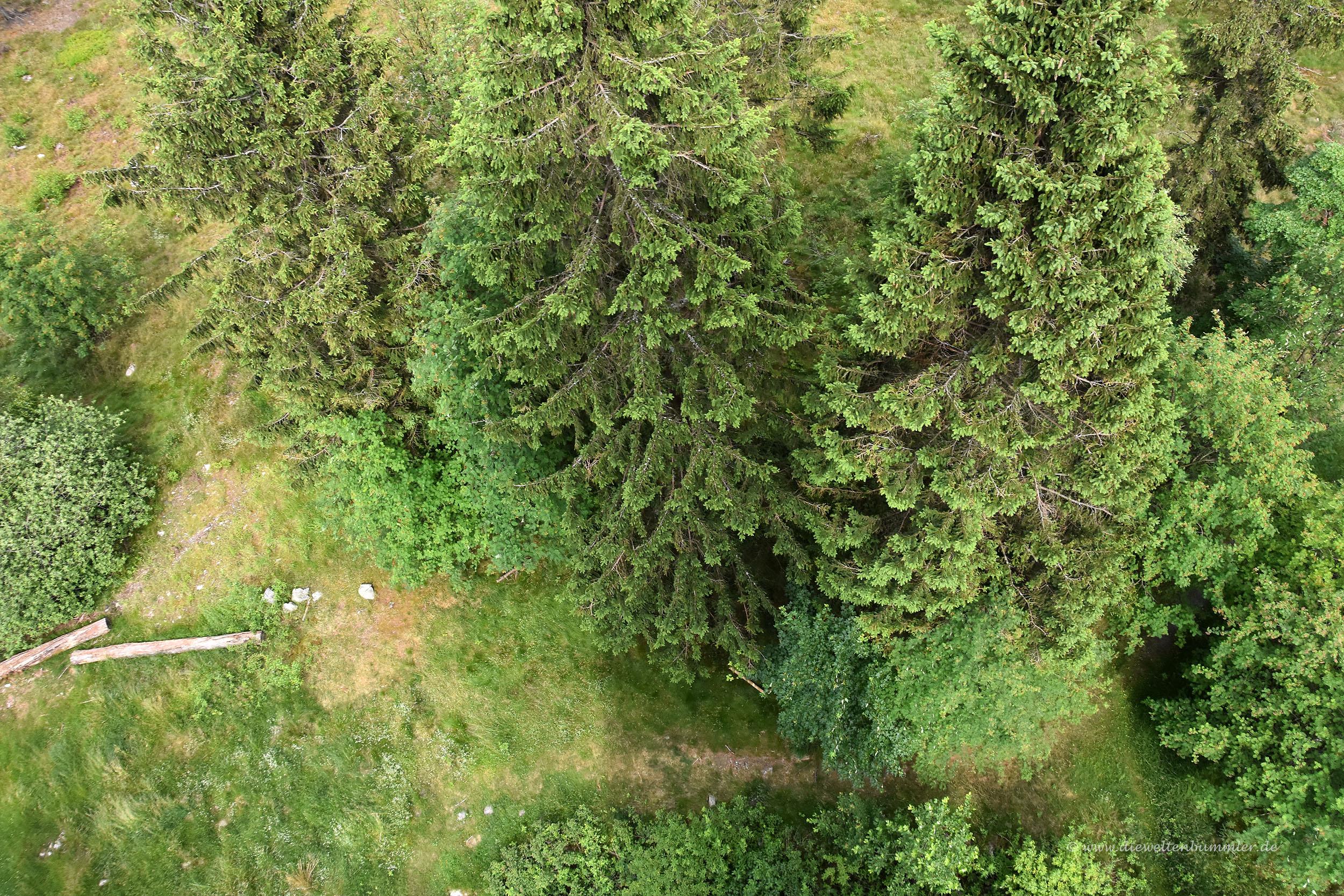 Blick in die Tiefe vom Kellerwaldturm